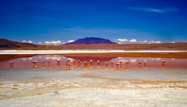 Panoramiczna słoneczna sceneria szerokiej laguny z różowymi flamingami