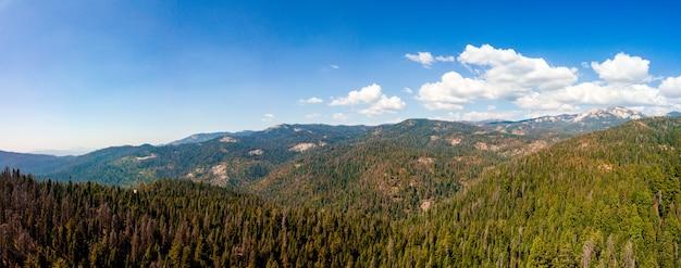 Panoramiczne ujęcie pięknego lasu w słoneczny dzień