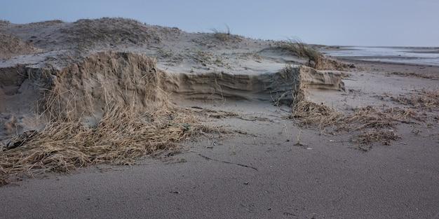 Panoramiczne ujęcie suchych wodorostów na piaszczystym brzegu oceanu