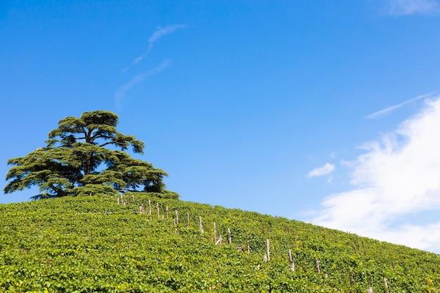 Panoramiczny krajobraz w regionie piemont, włochy. malownicze wzgórze winnic w pobliżu miasta barolo.