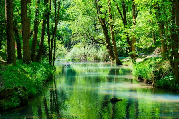 Panoramiczny las z rzeką odbijającą drzewa w wodzie.