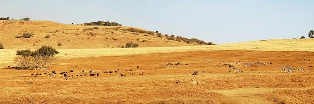 Panoramiczny widok dzikich zwierząt w rpa
