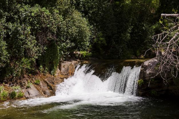 Panoramiczny widok kaskadowy rzeczny strumień w lesie. słoneczna pogoda. koncepcja natury