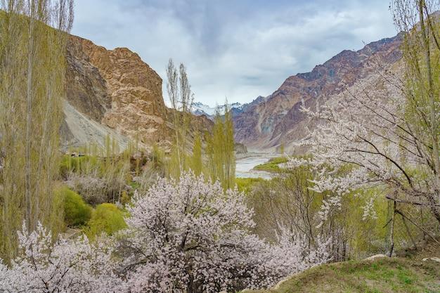 Panoramiczny widok na dolinę turtuk i rzekę shyok.