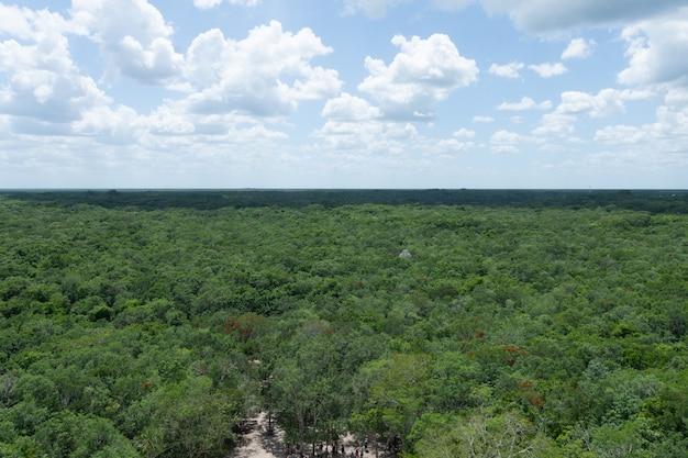Panoramiczny widok na dżunglę meksyku