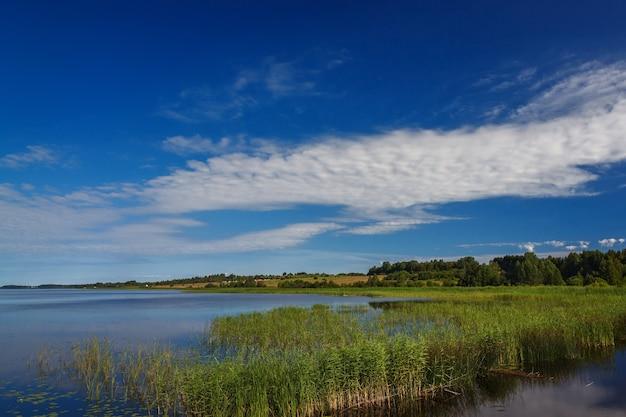 Panoramiczny widok na gładką taflę jeziora z roślinnością