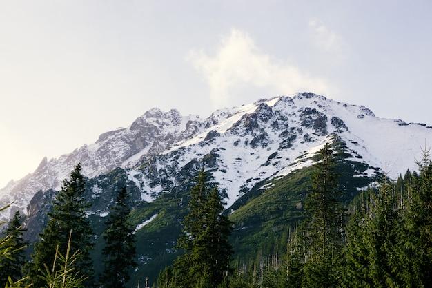 Panoramiczny widok na krajobraz lato w górach alp