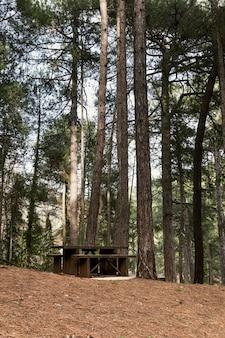 Panoramiczny widok na las