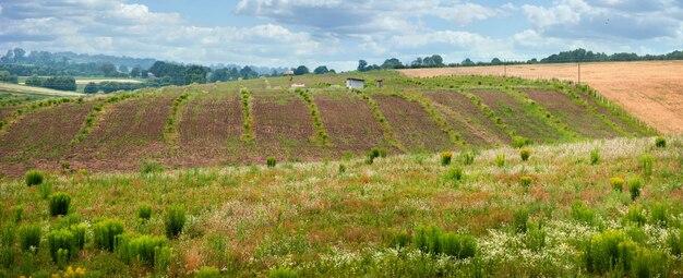 Panoramiczny widok na plantacje rolnicze, linie i wzgórza z góry, malownicze krajobrazy widok drogi