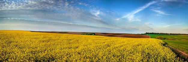 Panoramiczny widok na pobliskie pole rzepaku zaorane i zielone