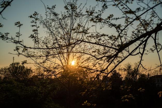Panoramiczny widok na zachód słońca między drzewami na wiosnę
