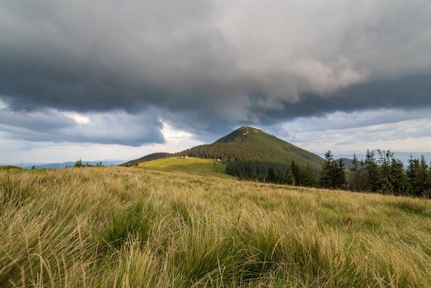 Panoramiczny widok na zieloną trawiastą dolinę