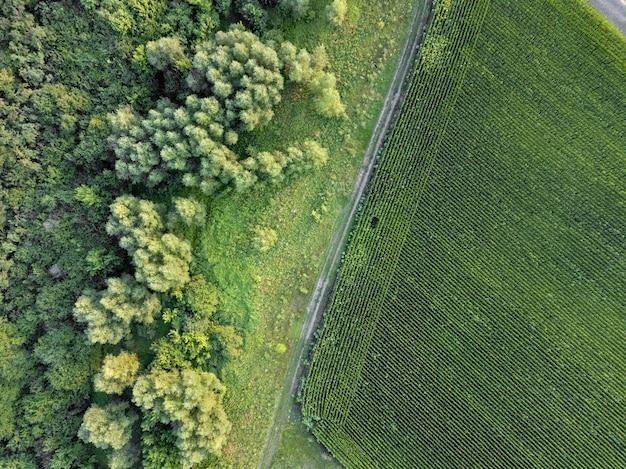 Panoramiczny widok z drona pola uprawnego z brudną wiejską drogą i zielonym lasem. naturalne tło roślin. widok z góry.