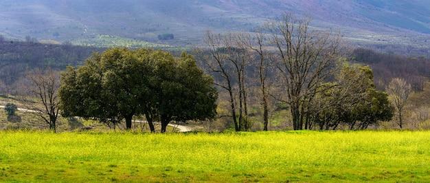 Panoramiczny zielony krajobraz z łąką z żółtymi kwiatami i zielonymi drzewami. madryt. hiszpania.