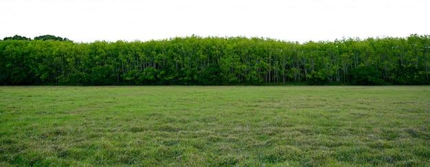 Panoramy drzewny biały tła sztandar