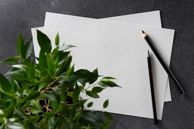 Papier akwarelowy a4 z czarnymi ołówkami i rośliną na czarno. widok z góry.