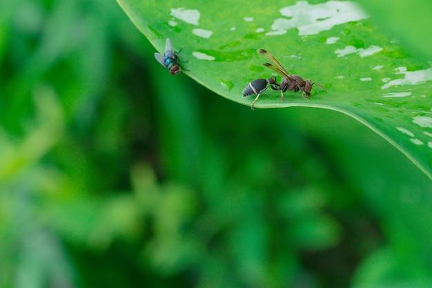 Papierowa osa przysiadła na zielonym liściu rośliny.