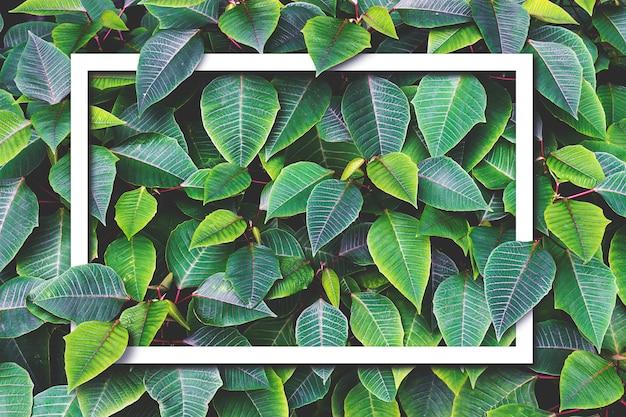 Papierowa rama z zielonym liścia tłem. nad światłem