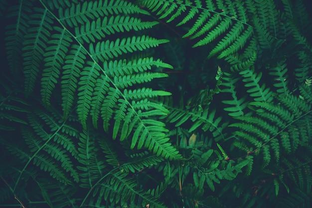 Paproć pozostawia tło stonowanych. ciemny nastrój tajemnicza natura tekstura w lesie