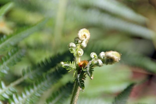 Paproć to najstarsza roślina na planecie pojawiła się na planecie około 400 milionów lat temu