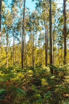 Paprocie między drzewami parku przyrody listorreta w miejscowości errenteria w parku na górze peñas de aya lub aiako harria. gipuzkoa, kraj basków