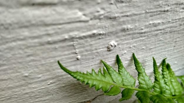 Paprocie zakładają na białej ścianie tło dla botanicznej tapety
