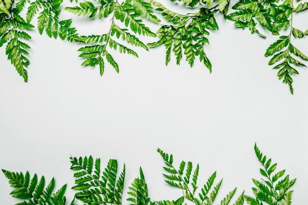 Paprociowi liście na białym tle