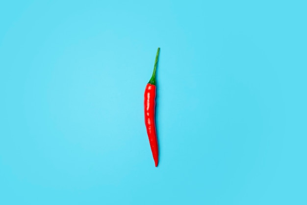 Papryczki chili na kolorowym niebieskim tle. czerwone ostre papryczki chili jako składnik przypraw i kuchni azjatyckiej i meksykańskiej