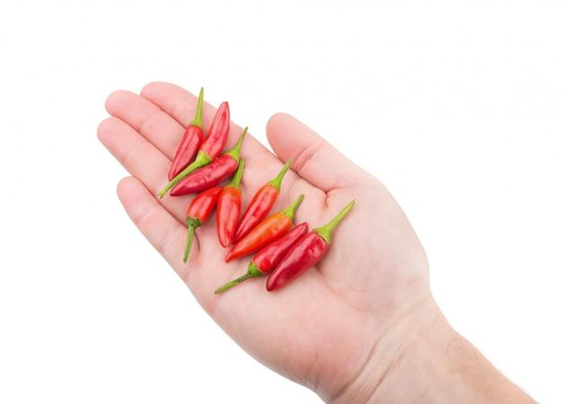 Papryka czerwona papryka w dłoni do gotowania. do przypraw.