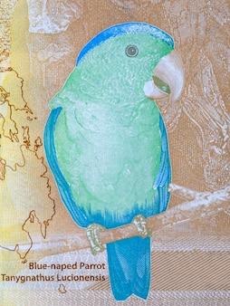 Papuga błękitna - portret z peso filipińskiego