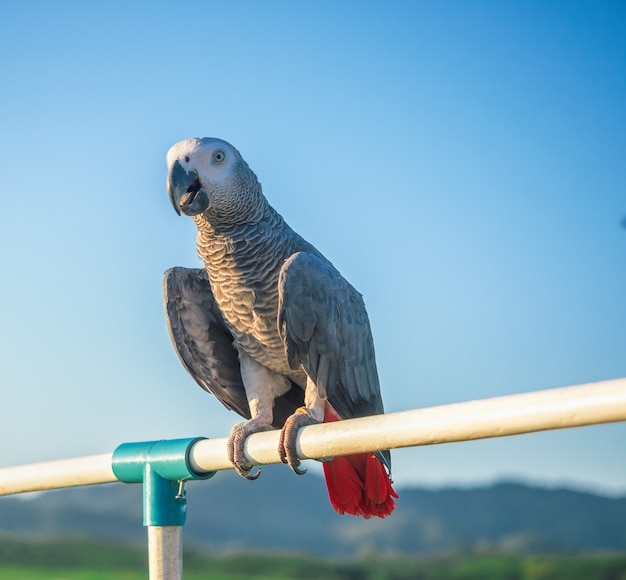 Papuga jest uroczym egzotycznym zwierzakiem