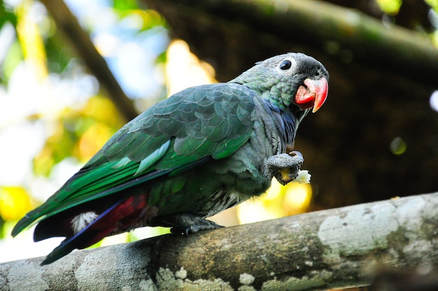 Papuga na gałęzi