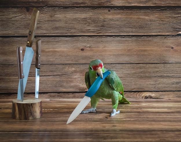 Papuga pirat, kucharz papugi. duży zielony papuzi pirat bawić się z nożem.