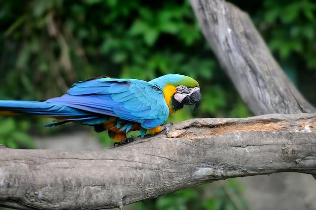 Papuga ptak (severe ara) siedzący na gałęzi