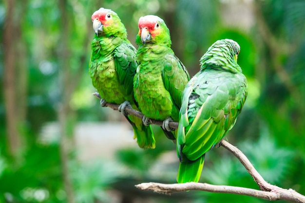 Papuga ptak siedzący na żerdzi