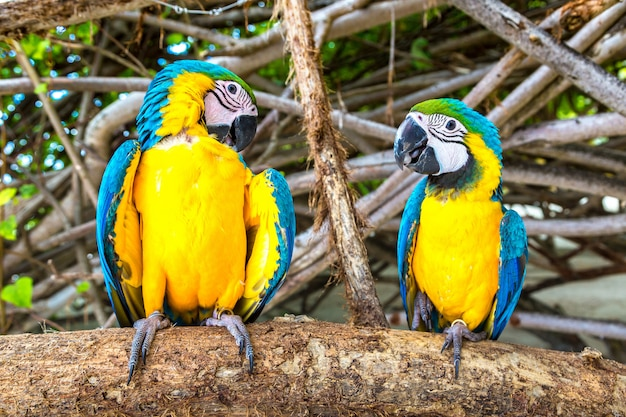 Papugi ara siedzi na gałęzi drzewa