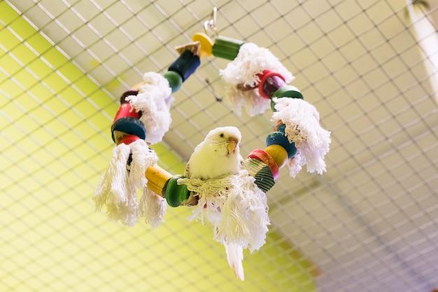Papużka falista w kontaktowym zoo. zwierzęta domowe