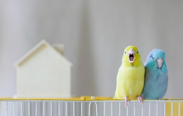 Para małej papugi stoi i otwiera usta na klatce
