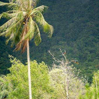 Para orłów siedzi na gałęzi drzewa obok zielonej palmy na tropikalnej wyspie koh phangan, tajlandia.