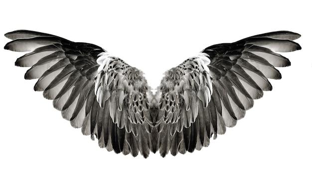 Para piór skrzydłowych na białym tle