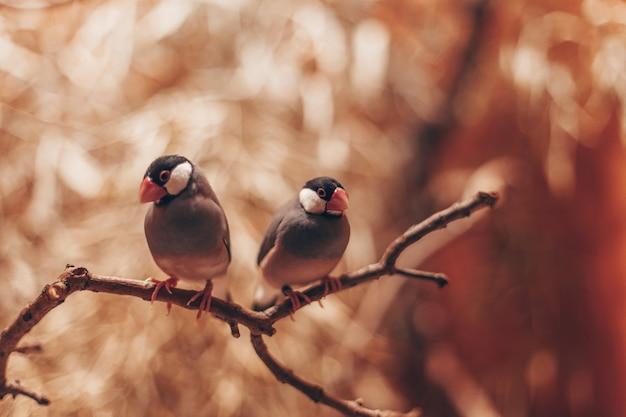 Para ptaków na gałęzi drzewa, pocztówce lub w tle