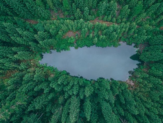 Para turystów pieszych dociera do górskiego jeziora w leśnej przestrzeni kopii
