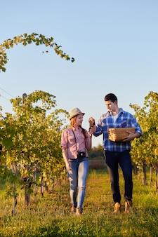 Para zbiorów winogron