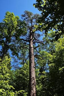 Park belovezhskaya pushcha w kraju białorusi