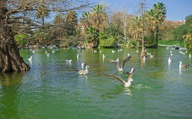 Park ciutadella w barcelonie. tropikalny ogród, jezioro i palmy, wiele pięknych ptaków