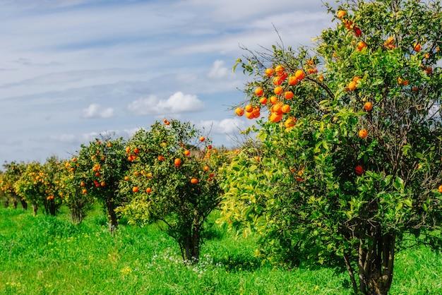 Park drzew pomarańczowych