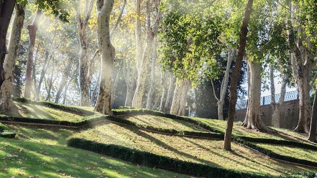 Park gulhane piękny starożytny park z wysokimi drzewami w starym centrum stambułu w turcji