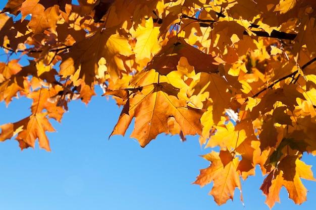 Park jesienią - drzewa rosnące w parku w okresie jesiennym, zbliżenie, zmieniające się ulistnienie