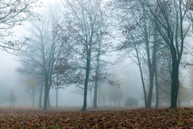 Park jesienią w małej mgle. liście klonu opadłego na ziemię i ciemne pnie roślin. zdjęcie zostało zrobione z bliska, małej głębi ostrości i słabej widoczności z powodu zamglenia.