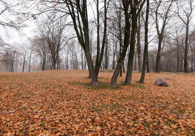 Park jesienny, zachmurzenie - park jesienią, przy pochmurnej pogodzie, późną jesienią,